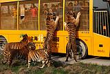 [上海一日]<上海野生动物园一日游>