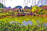 【中达旅游专供】无锡惠山古镇、梅园一日游