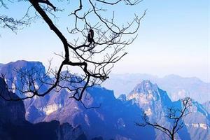 [张家界五日游]<张家界森林公园-张家界大峡谷-凤凰古城>