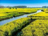 [兴化一日]<全球四大花海-千垛油菜花-泰州老街>