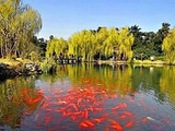 [杭州二日]<双溪竹筏漂流-清凉风水洞-杭州西湖-花港观鱼>