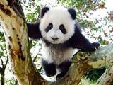 【蜀山行豪华双动6日游】<峨嵋-乐山-都江堰-熊猫乐园>