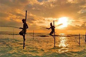 [斯里兰卡7日]<西格利亚-丹布拉-南部海滨-康提>