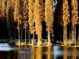 【兴化一日】<兴化李中千亩水上森林-万亩荷塘-清凉避暑>