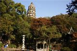 苏州拙政园、虎丘、上海都市纯玩2日跟团游