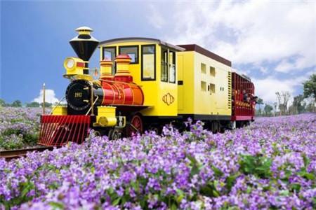 【春日踏青·赏花系列】嘉善新西塘歌斐颂花海香甜之旅1日