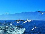 【印象云南】洱海游船、天空之境、大理古城、石林、雪山大索
