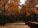 [苏州一日]大阳山植物园-隆力奇小镇一日游