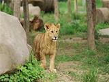 [常州一日]淹城野生动物园