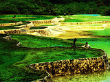熊猫基地、九寨沟、黄龙100%真纯玩 6日游
