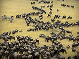 肯尼亚9天英文团