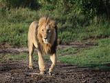 肯尼亚10天 乞力马扎罗+纳库鲁湖+奈瓦沙