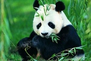 九寨沟黄龙熊猫乐园双飞六日游|南宁到九寨沟旅游团