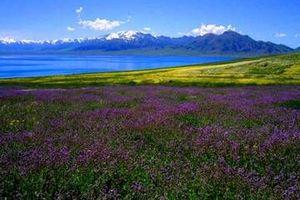 新疆喀纳斯、禾木、克拉玛依魔鬼城、天山天池、吐鲁番双飞七日游
