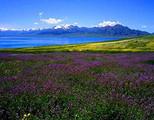 新疆喀纳斯、禾木、魔鬼城、吐鲁番、天山天池双飞八日游