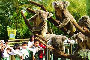 长隆野生动物世界、国际大马戏、广州岭南印象园、花城广场二日游