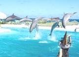 港澳海洋公园四天游