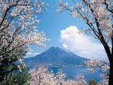 日本东京、富士山、京都、大阪5+1日游