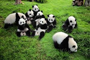 成都、剑门关、阆中古城、熊猫乐园、都江堰6日