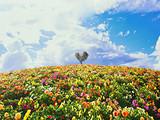 【情人节寻梦】日本北海道、小樽、札幌、函馆、青森十日半自助游