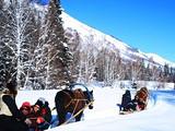 哈尔滨、亚布力滑雪、童话雪乡5日游