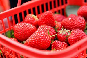 草莓采摘+真人CS野战1日游