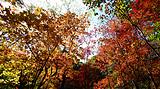 关门山赏枫叶、本溪水洞两日游