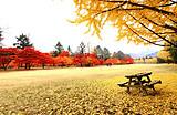 韩国首尔南怡岛5天游