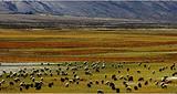 西藏拉萨、布宫、纳木措、日喀则三飞一卧9日(飞进卧出)
