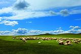呼和浩特、希拉穆仁草原、库不齐沙漠、塞外青城臻醇玩双卧6日游