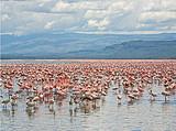 肯尼亞10天觀看野生動物特色之旅