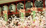 日本北陆米其林、白川乡合掌村、富士山风情8日游