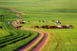 【醉草原·行無憂】呼倫貝爾草原南北環線蒙古王尊享四日游