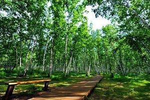 【醉草原·行無憂】呼倫貝爾大草原·室韋·浪漫滿洲里品質4日游