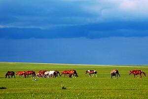呼倫貝爾大草原恩和室韋滿洲里阿爾山7日南線拼車游
