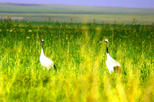 呼倫貝爾大草原海拉爾阿爾山滿洲里南北環線6日游