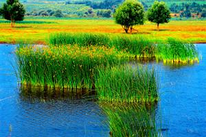 呼倫貝爾大草原海拉爾阿爾山國家森林公園南線深度全景5日游