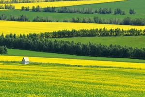 呼倫貝爾大草原海拉爾黑山頭滿洲里阿爾山南北環線深度7日游