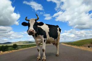 【聆听草原】呼伦贝尔草原+恩和+满洲里+私家牧场跟团3日游