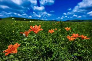 呼伦贝尔草原海拉尔莫日格勒河额尔古纳湿地白桦林3日游