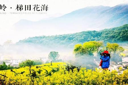 徐州到江西婺源赏花精华纯玩三日游丨3月婺源花开的季节