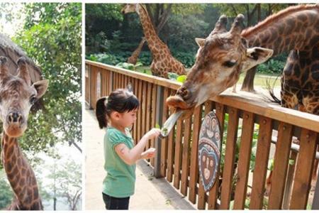 徐州到广州长隆野生动物园双高5日游丨长隆特色乐园一价全含