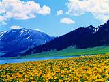 大美新疆旅游专线-北疆7日游
