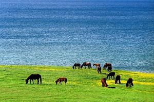 新疆旅游拼车计划实时更新
