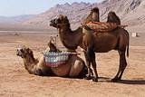 吐鲁番、库尔勒、库车、阿克苏、喀什、天池、敦煌单飞单卧九日游
