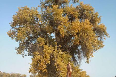 天池+吐鲁番+大美新疆旅游专线北疆+南疆16日游-独家发团
