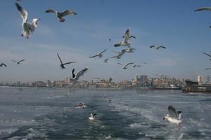 国旅-俄罗斯海参崴往返动车3日游