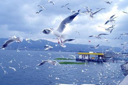 短線周邊游 至尊遼寧丹東鳳凰山大鹿島3日游