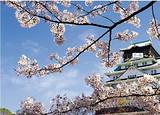 【日本本州亲子】东京+大阪  济南出发3飞六千赢国际手机版