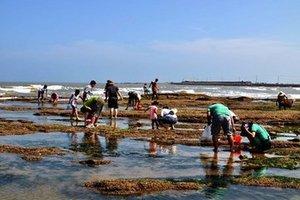 青岛极地海洋世界+黄岛金沙滩大巴纯玩两日游